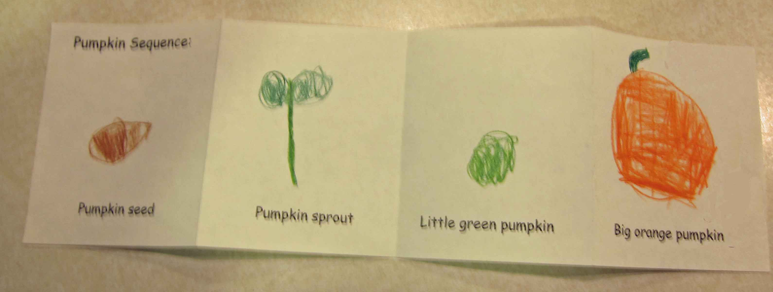 worksheet Parts Of A Pumpkin Worksheet plants phonics by spellings blog pumpkin plant vine